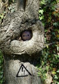 Steckdosebaum1